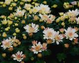 FLOWERS AT THE VAN WINGERDEN OPEN HOUSE (17)