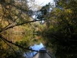 Wekiwa River