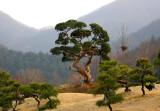 Morningcalm  park in Gapyeong
