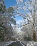 White Oak on a Snowy Day