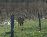 Jumping Buck