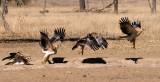 Birds of the Kgalagadi 2009