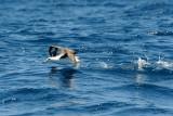 Pelagic Birds 2009