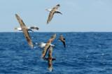 Albatross Convention 1