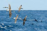 Albatross Convention 2
