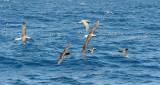 Albatross Convention 3