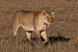 Kgalagadi Transfrontier Park - April 2008