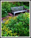A Garden Bench Along An Obscured Path