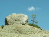 Instant magique, rencontre entre un rocher et un bonzaï.