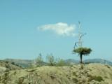 L'arbre au tutu.