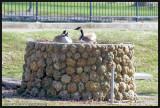Goose planter
