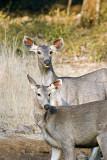 Ranthambore game preserve