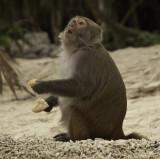 halong bay, Monkey Island