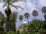 Palm trees in Alanya