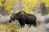 Animals and Birds, Montana and Wyoming