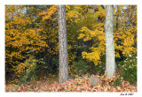 the_fall_season