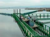 Pantena fishing system - Arte de pesca - Art de pesca