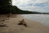 Cahuita natural park II