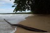 Cahuita natural park III