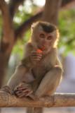 Monkey Hooiy 2.