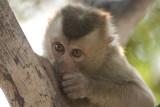 Monkey'Hooiy '3.