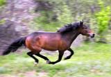 Russian Wild Horses