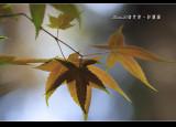 ShanLinXi_05.jpg