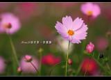 ShanLinXi_26.jpg