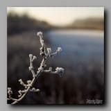 11 - Winter