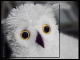 December 10th: Harry's Hedwig
