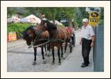 Kazimierz DolnyTaxi cheval