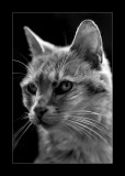 Vieille Chatte