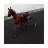 Courses à Vincennes Le 12
