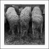 Salon de l'agricultureSans-culottes
