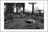 Chat au cimetière des chiens