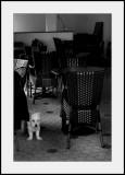 Chien et chaises assorties