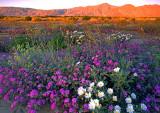 First Light at Anza Borrego Desert State Park, CA