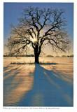 White Oak, Sierra Club Engagement Calendar, 1993