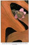 Oak Leaves and Hepatica, Audubon Engagement Calendar, 1992