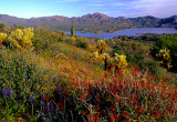 (DES 66) Bartlett Lake, AZ