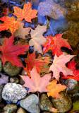 (NE5) Leaves at the edge of stream, VT