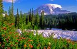 (IG5) Mount Rainier,  a composite cone, Mt. Rainier National Park, WA