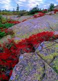 (NE15) Cadillac Mountain, Acadia National Park, ME