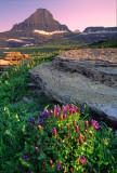 (CR25) Reynolds Peak and Explorer Gentians, Glacier National Park, MT
