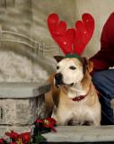 Lakeland SPCA December 2009