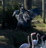 Shoebill Stork & Lowry Park Zoo