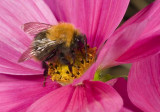 Bees and Bumble bees