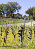 Vineyard Homestead 2 r.jpg
