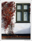 Window and leaf