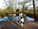 Joop's Dog Log - Wednesday Jan 05